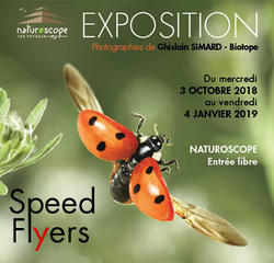 Exposition Speed Flyers